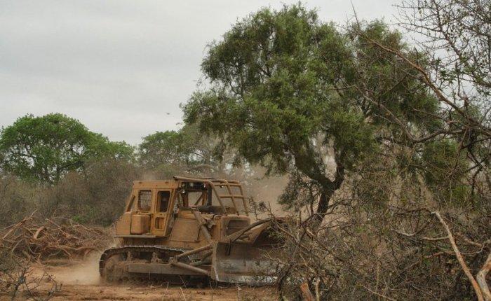 Se registraron 586 delitos ambientales en el sexenio dePeña